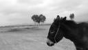 donkeyearsback